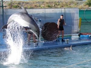 Дельфинарий на Утрише